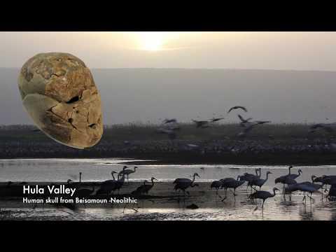 אתרים פרה היסטוריים בישראל (אנגלית)