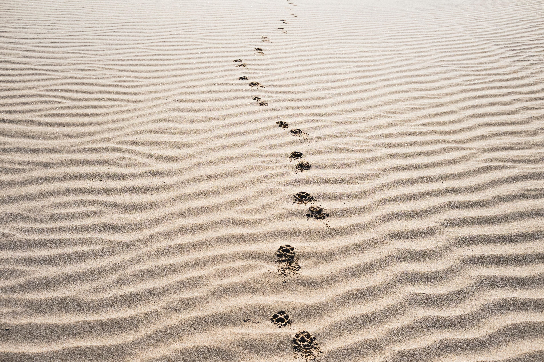 הרב גלעד קריב- סוכות כחג של הליכה ותהליך