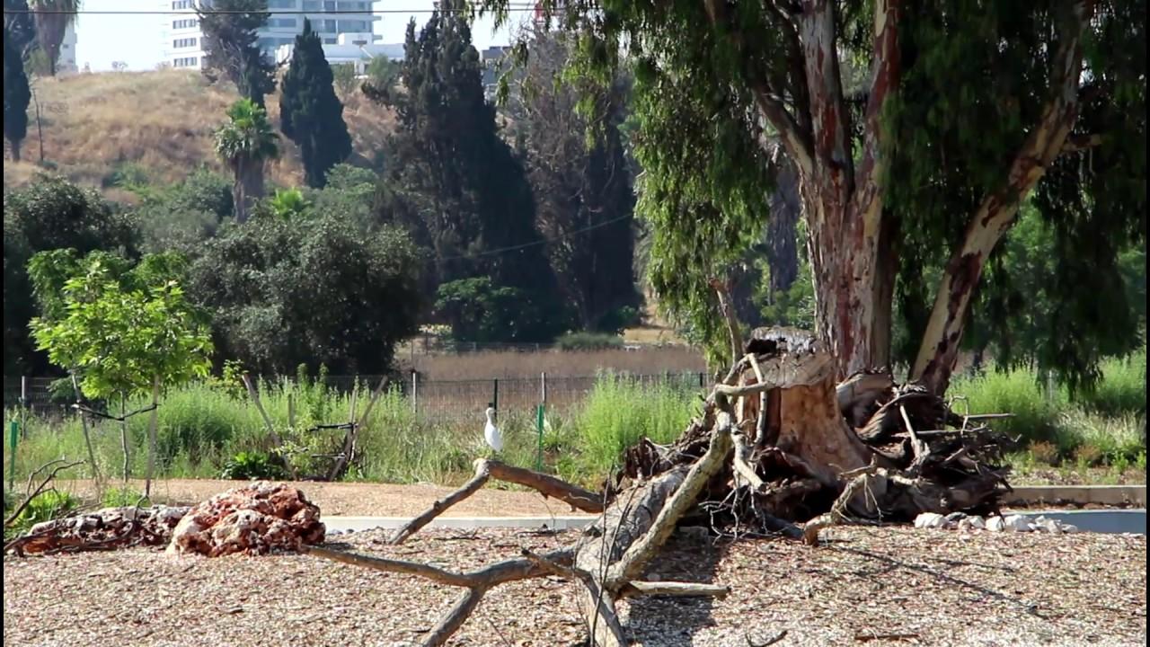 Restoring Tel Aviv's Yarkon River