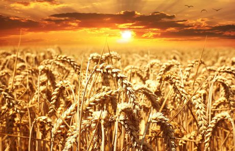 Let Us Bring Forth Food: Humanistic Ha-Motzi